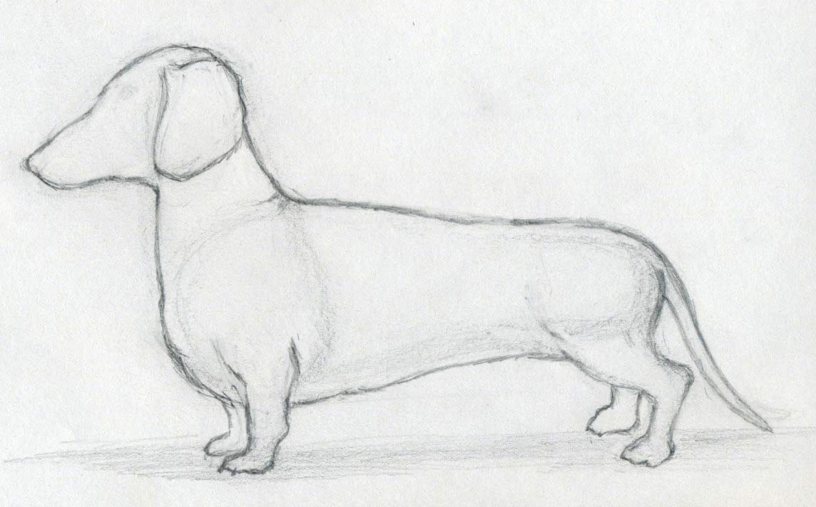 Easy Dog Drawings Simple To S