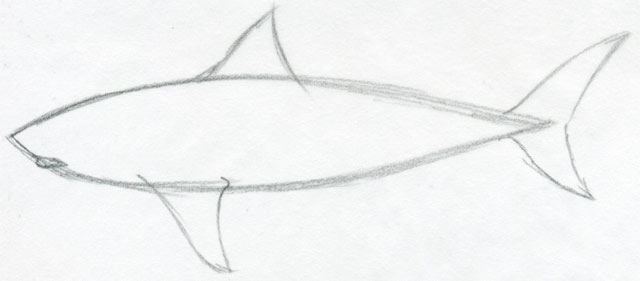 Gallery For gt Simple Shark Drawing