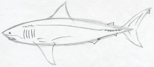 Draw Shark