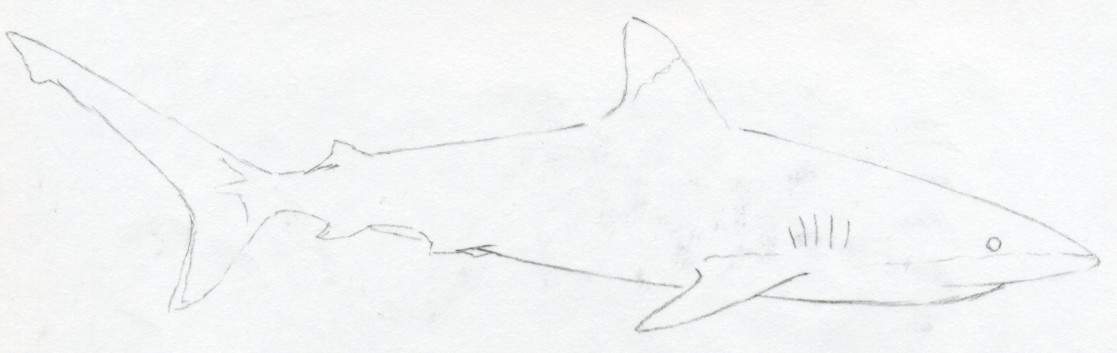 How To Draw Sharks Tower Dlugopisyreklamowe Co