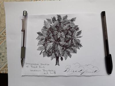 IMAGINATIVE DRAWING OF BREADFRUIT TREE