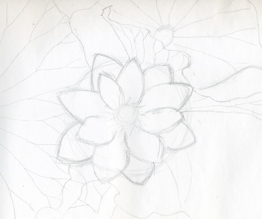 Lotus flower drawings made easy click the image to enlarge mightylinksfo