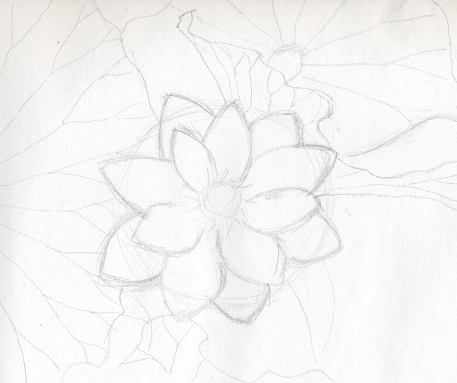 Lotus Drawings Ecosia