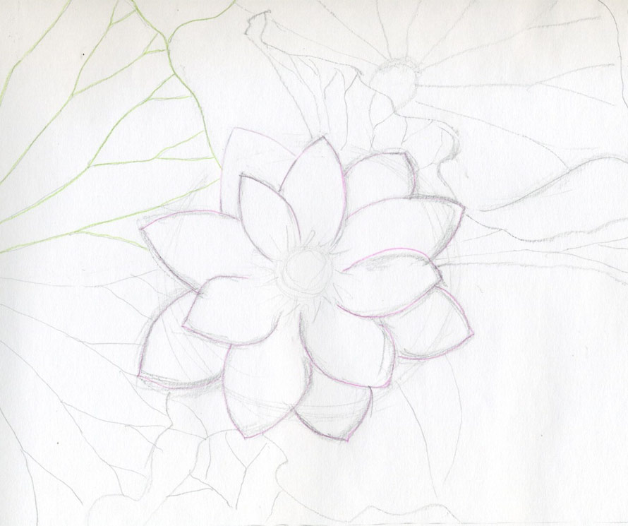 Simple lotus flower drawings