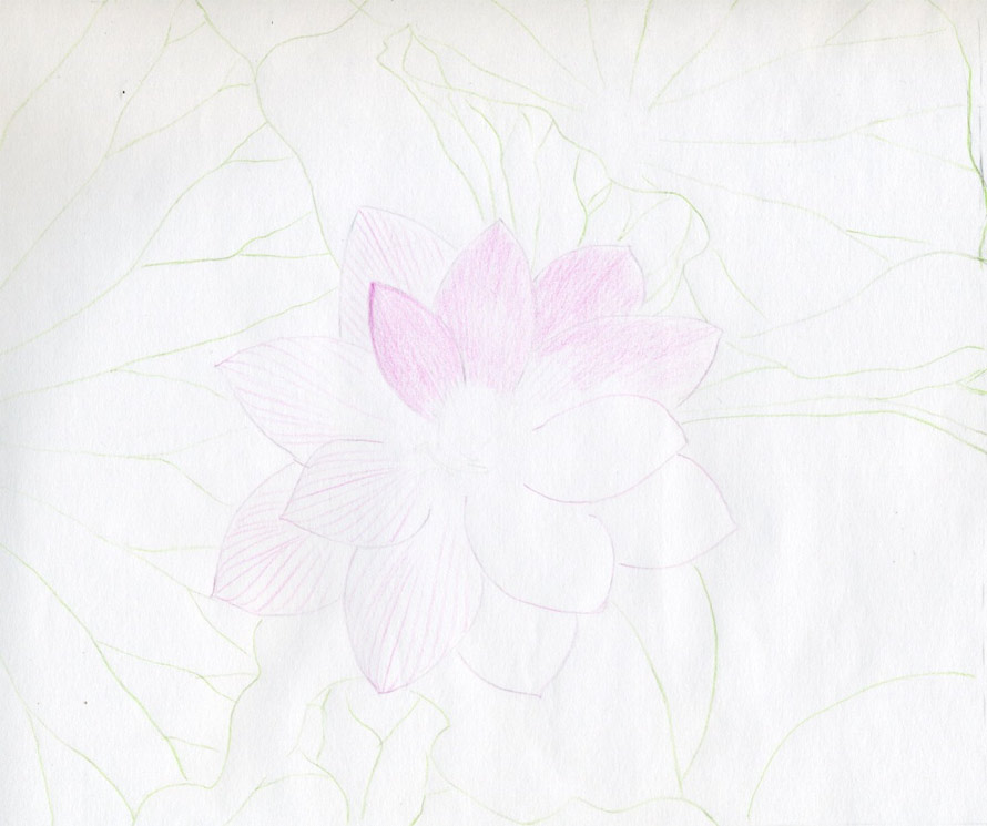 Lotus Flower Drawings Made Easy