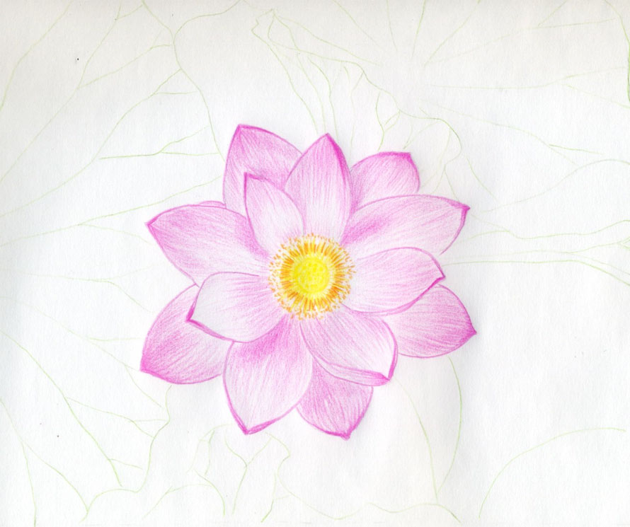 It's just an image of Crush Lotus Flower Drawing Sketch
