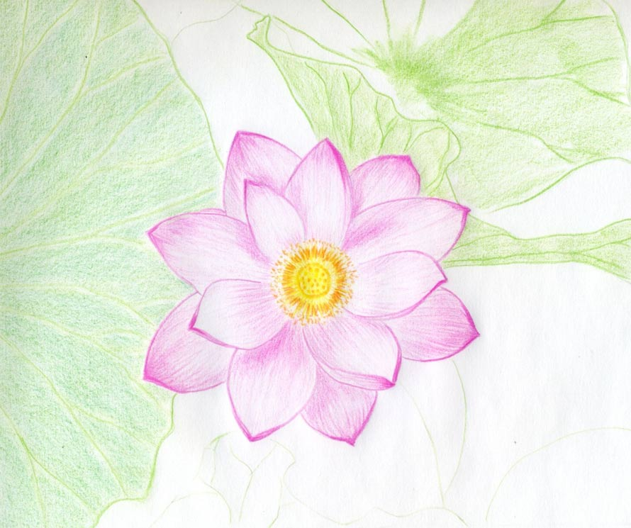 Lotus flower drawings made easy mightylinksfo