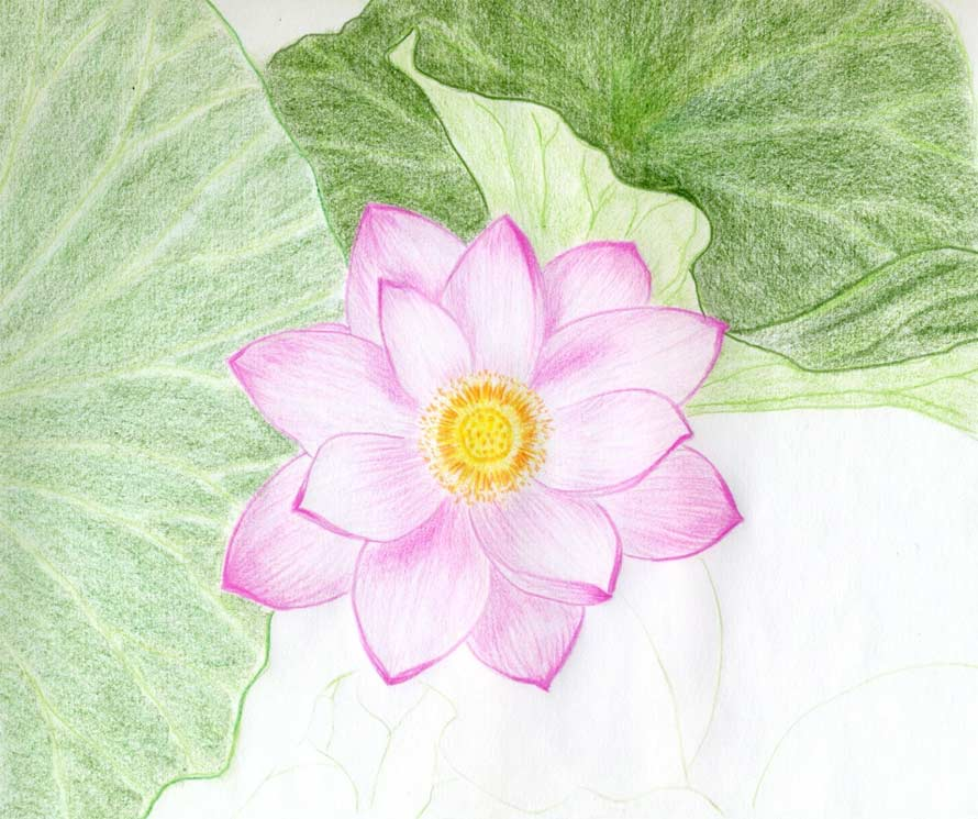 Lotus flower drawings made easy for Simple flowers for drawing