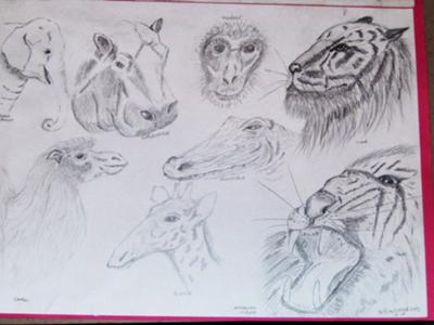 My 1st wildlife scetches