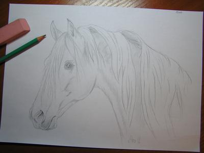 drawing of a horse