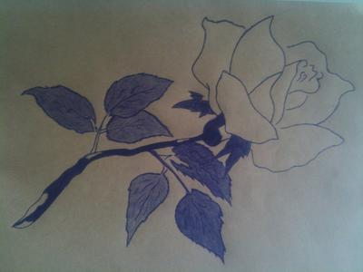 My first attempt drawing a rose in pen