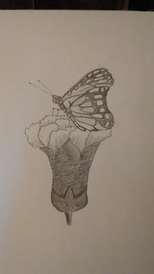 My first butterfly on flower drawing