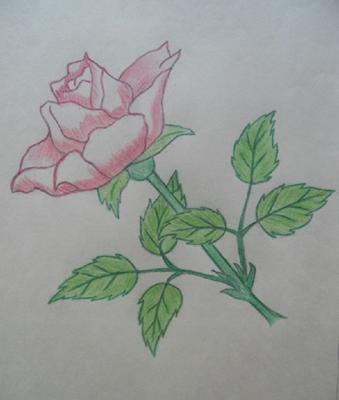 Rose for Ila