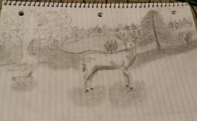 my first deer drawing