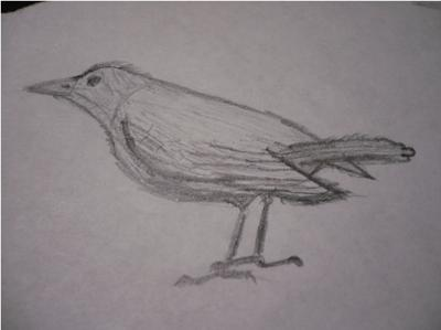 my first detailed drawing a bird
