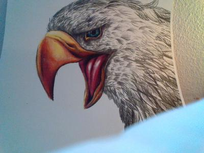 My first drawing of a bald eagle