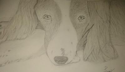 My First Drawing of A Dog