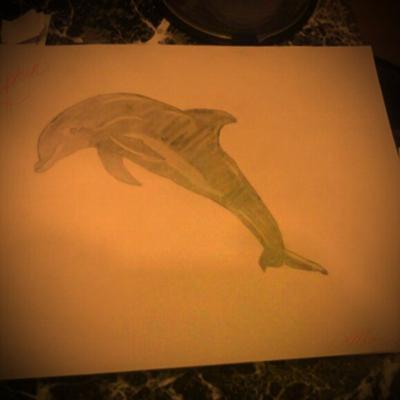 Bestfriend dolphin