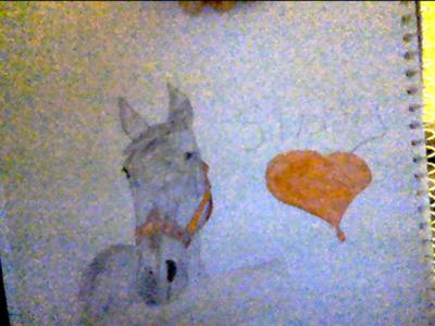 My Horse Silverboy