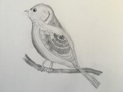 My first drawing of a realistic bird