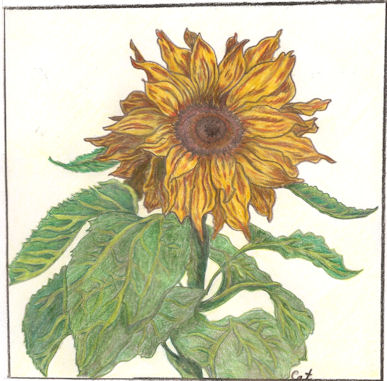 Sunflower for my Sister