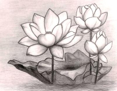 My first flower drawing