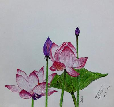 My first lotus flower drawing mightylinksfo