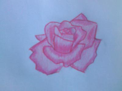 My First Rose Drawing