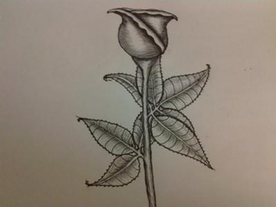 NEW HOW TO DRAW A ROSE WITH PEN