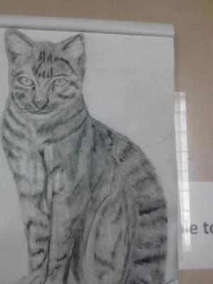 My first sketch of a cat