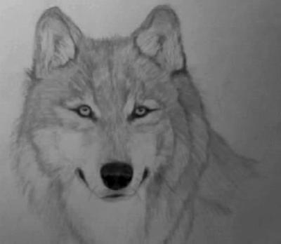 How To Draw A Wolf Pup Easy | Aktual Post: aktualpost.tk/how/how-to-draw-a-wolf-pup-easy.html