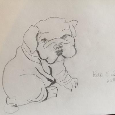 My first wrinkle puppy drawing