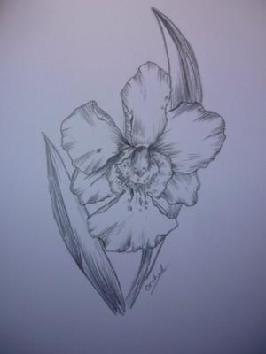 Orchid Flower Picture on My Flower Drawing