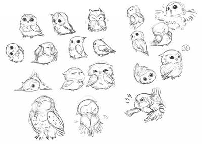 My owl sketches