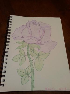 best rose