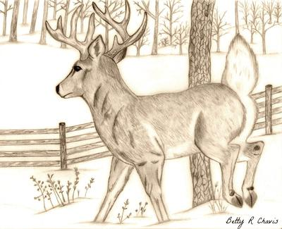 Pencil Drawing Of A Buck