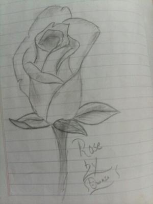 Pencil sketch of Rose