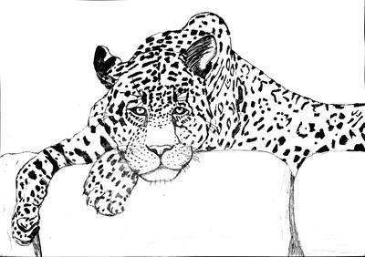Reluctant Jaguar