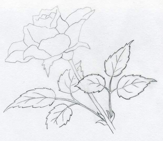 Enjoy rose drawings
