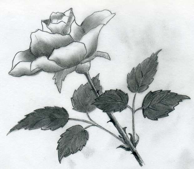 Raindrops on Roses Drawing do You Love Drawing Roses
