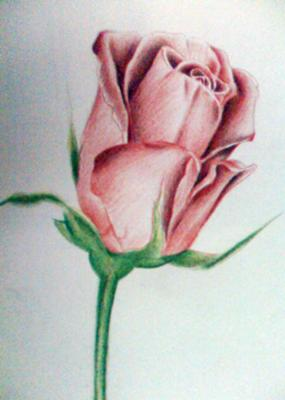 Rose Shading With Color Pencils