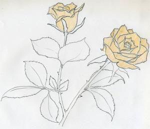 Как нарисовать розу за несколько простых и понятных шагов