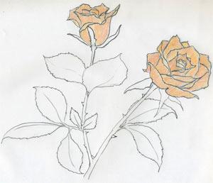 Как сделать набросок розы за несколько простых и понятных шагов