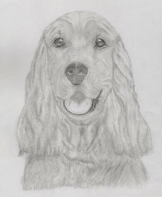 Lynn's Awesome Pencil Drawings of Dogs
