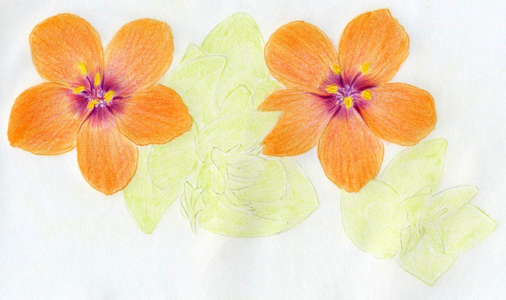 Drawing Colored Flowers Easy Flowers Healthy