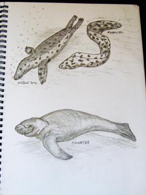 animals in my scetch book