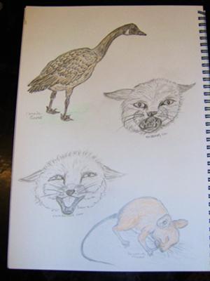 sketch book doodles