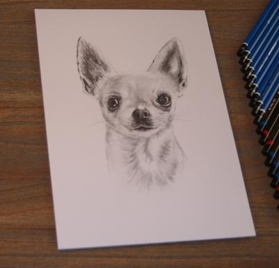 Speed drawing Chihuahua
