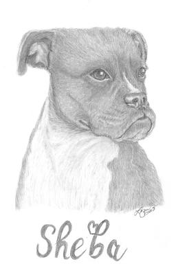 Pencil Drawings by Lynn: www.easy-drawings-and-sketches.com