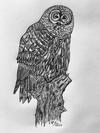 Owl on a Stump